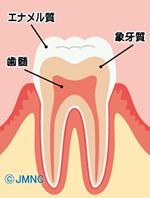 歯の構造を知ろう